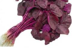 Red Spinach